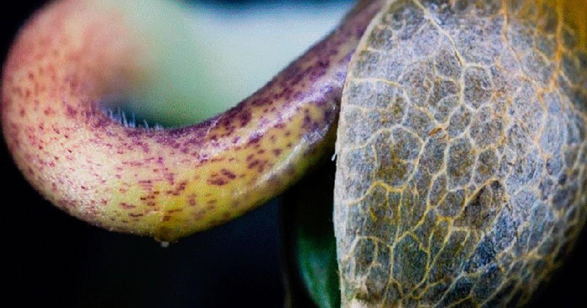Освещение ростков конопли за какое время выводится конопля с организма
